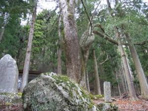 日本武尊の越掛け石